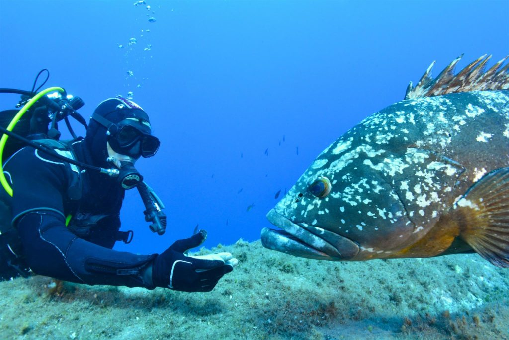 plongeur mérouville BOnifacio