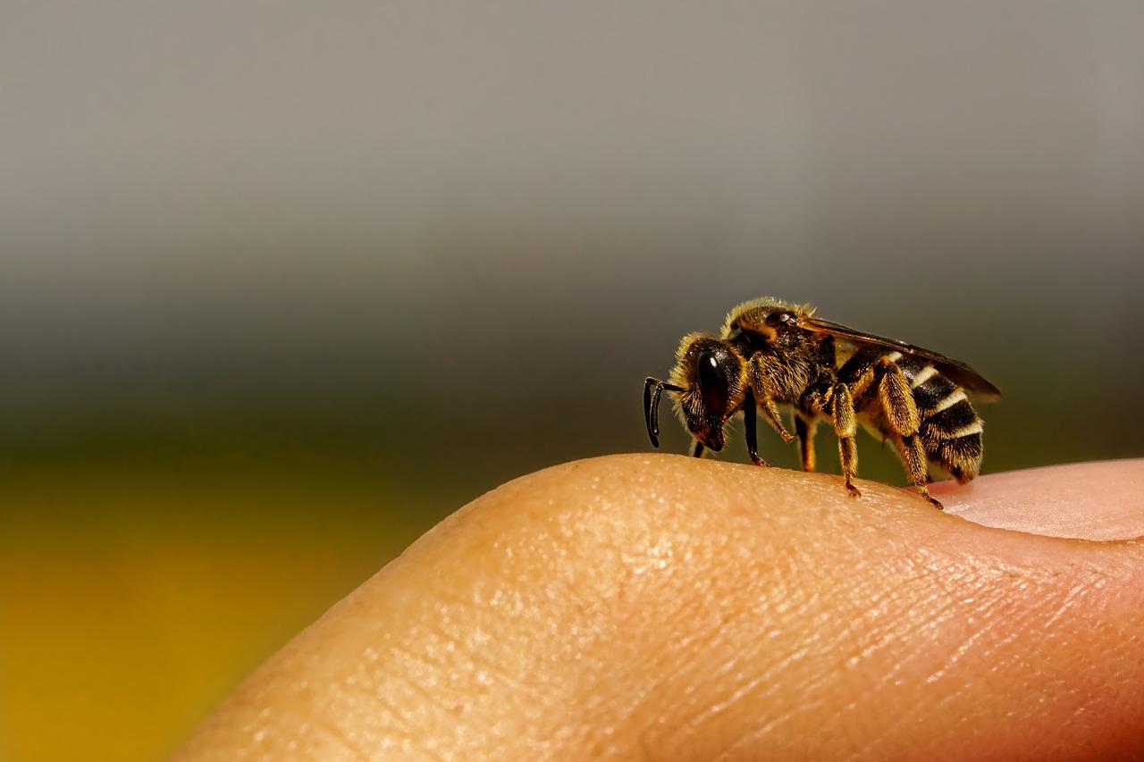 Guêpe, abeille, méduse, oursin, serpent…Ne les laissez pas vous gâcher l'été