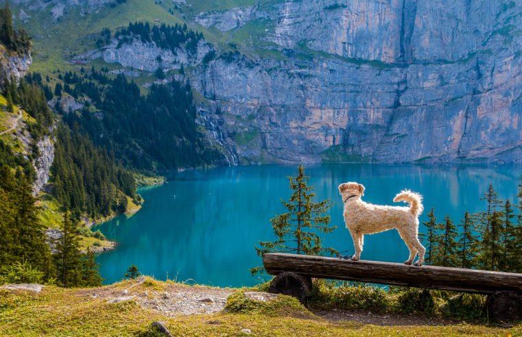 Vacances avec son chien