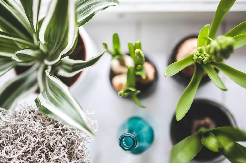 Plantes dépolluantes : purifier l'air de sa maison
